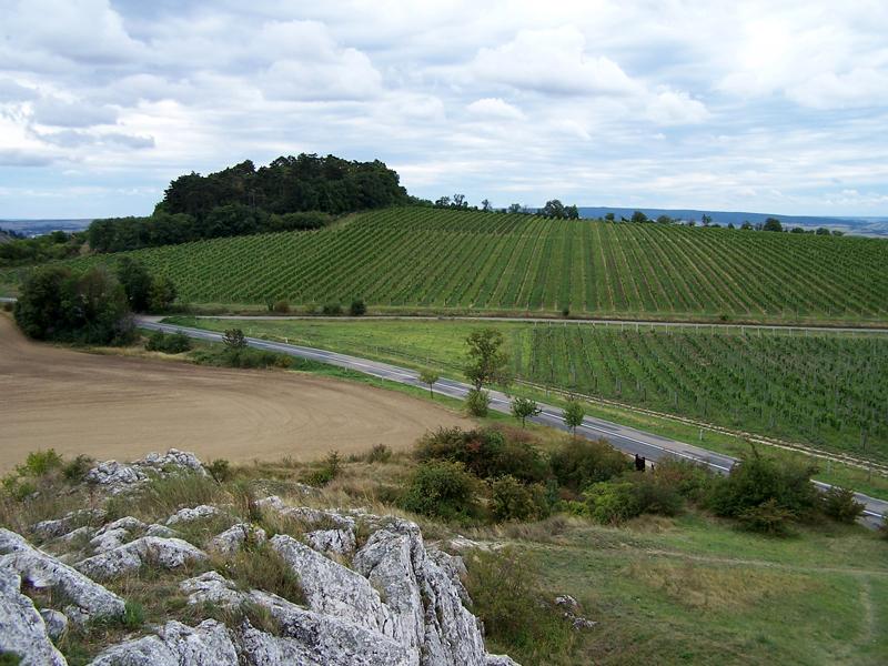 vinohrady z Kočičí skály